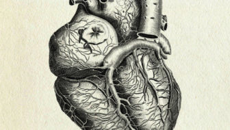 "Anatomica heart illustration - Heart for Sian Griffiths - ""Key Bearer's Parents"""