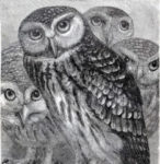 Owls-VintageGraphicsFairysm